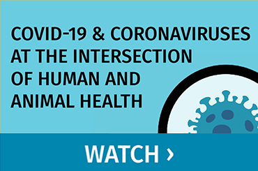 Covid-19 & Coronaviruses at the Intersection of Human and Animal Health