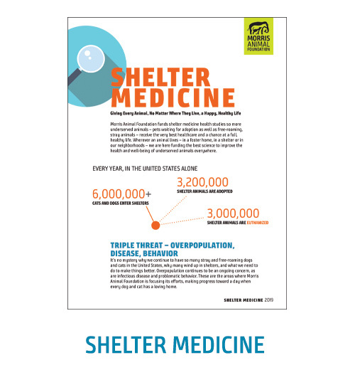 Shelter Medicine White Paper