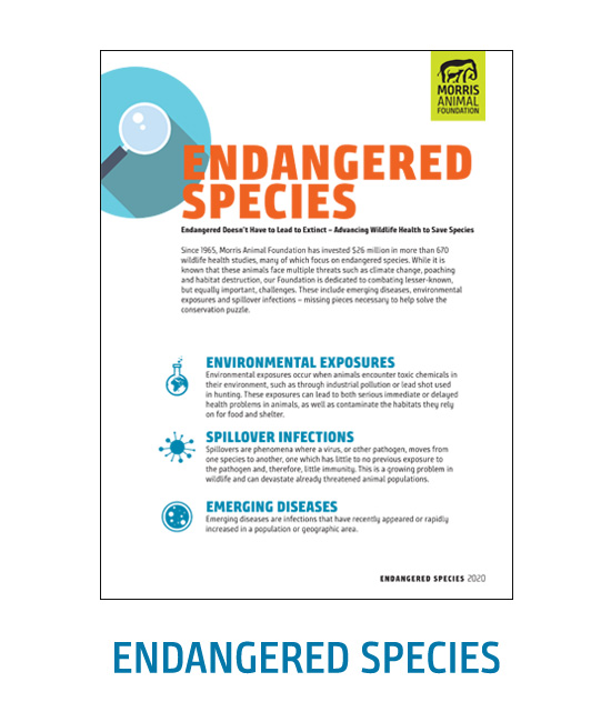 Endangered Species White Paper