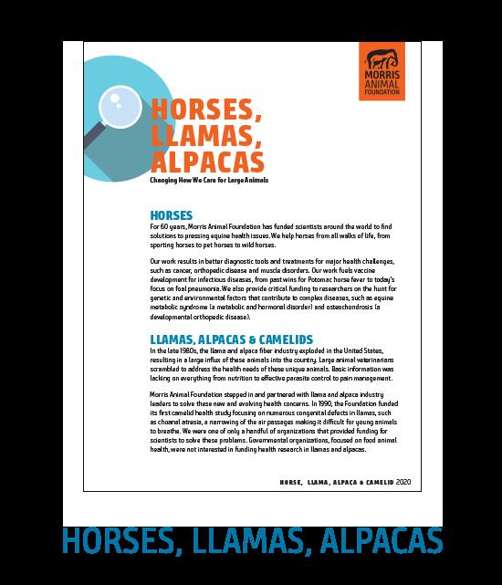 Horses, Llamas & Alpacas White Paper