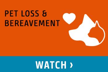 Pet Loss & Bereavement