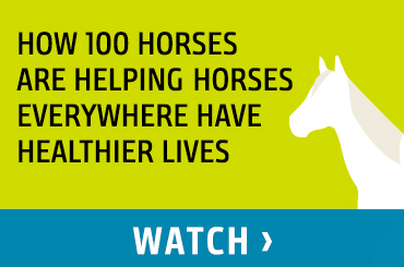 How 100 Horses Are Helping Horses Everywhere