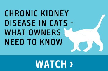 Chronic Kidney Disease in Cats - What Owners Need to Know