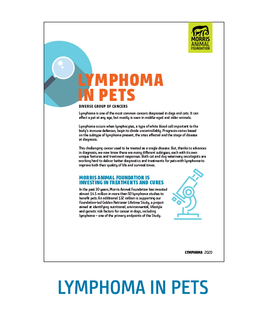 Lymphoma White Paper