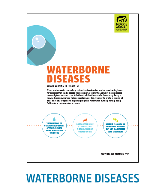 Waterborne Diseases White Paper