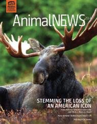 AnimalNEWS 20.4