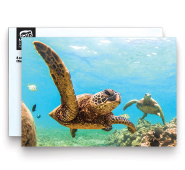 Honor Card Wildlife - Image of sea turtles