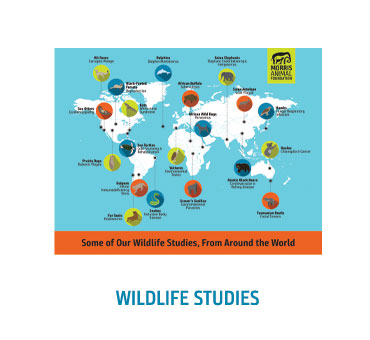 Wildlife Infographic