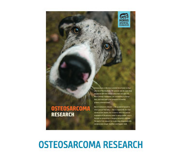 Osteosarcoma Booklet