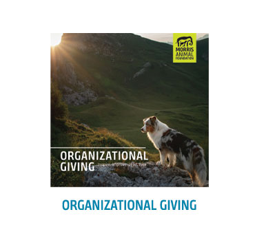Organizational Giving