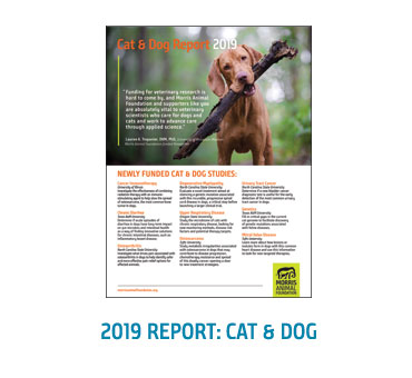 2019 Dog & Cat Report