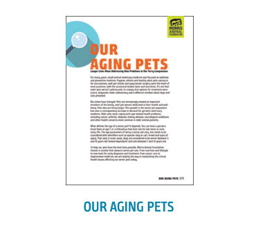 White Pages - Aging Pets