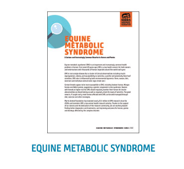 White Paper - Equine Metabolic Syndrome