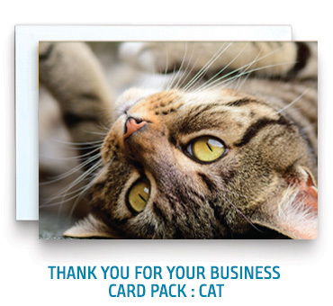 Thank You for Your Business Pack: Cat