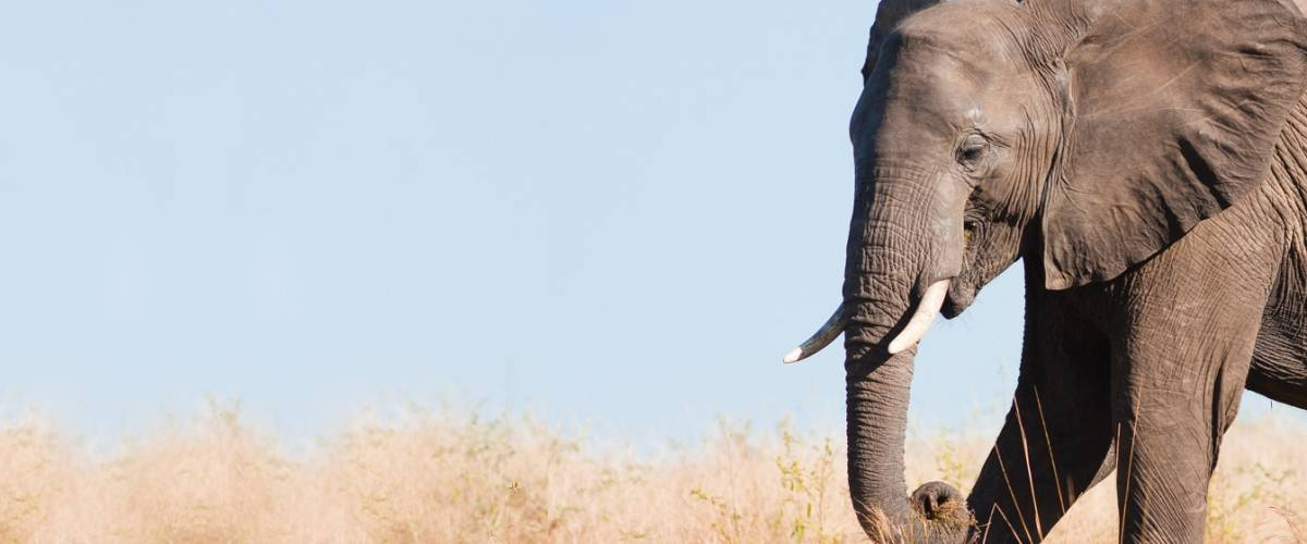 Wildlife_elephant AnimalNEWS