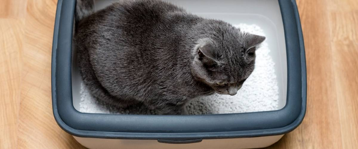 What is That in the Litterbox? – Dealing with Diarrhea in Cats | Morris  Animal Foundation