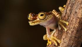 close-up of a tree frog on a branch