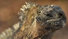 close-up of a large lizard