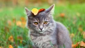 cat with a leaf on its head