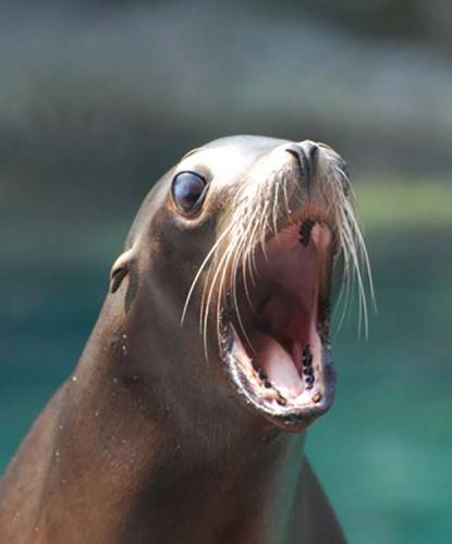 Sea Lion, Unite to Fight Animal Cancer