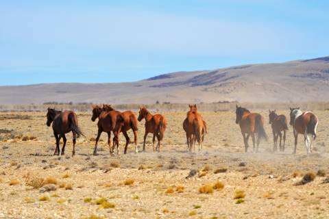 a group of horses run in the desert