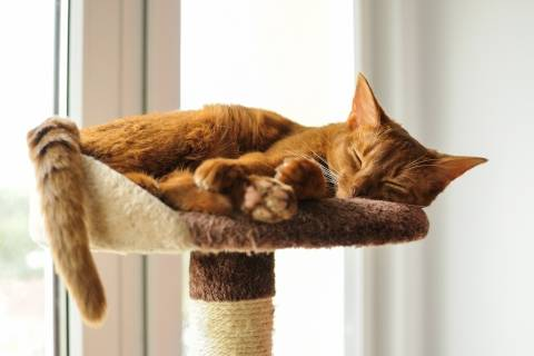 cat laying on top of a cat tree