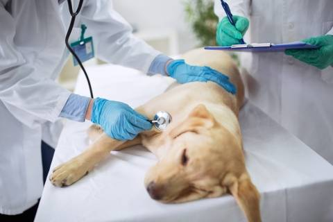 puppy on a veterinary table with two doctors examining it