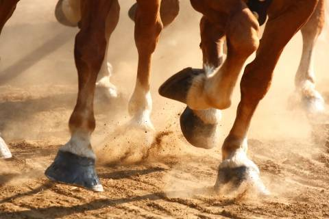 close-up of horse hooves running