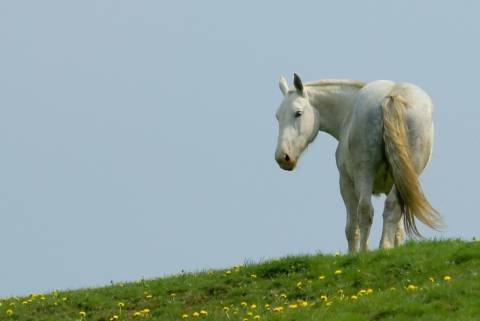 photo of white horse in a field
