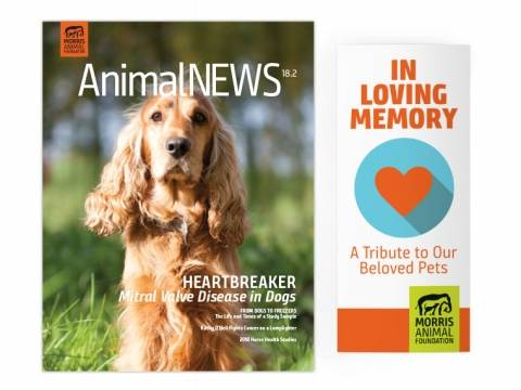 Image of the Animal News Pamphlet Cover