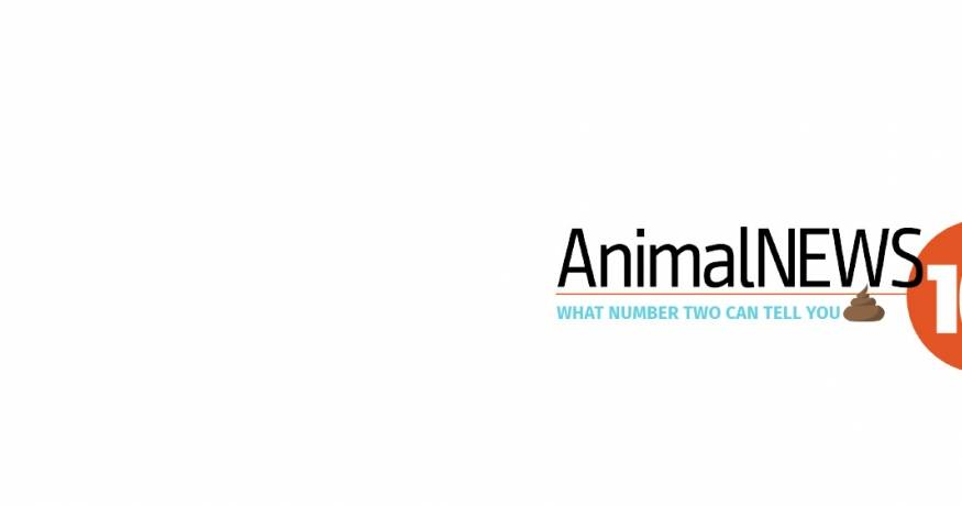AnimalNEWS Webinar
